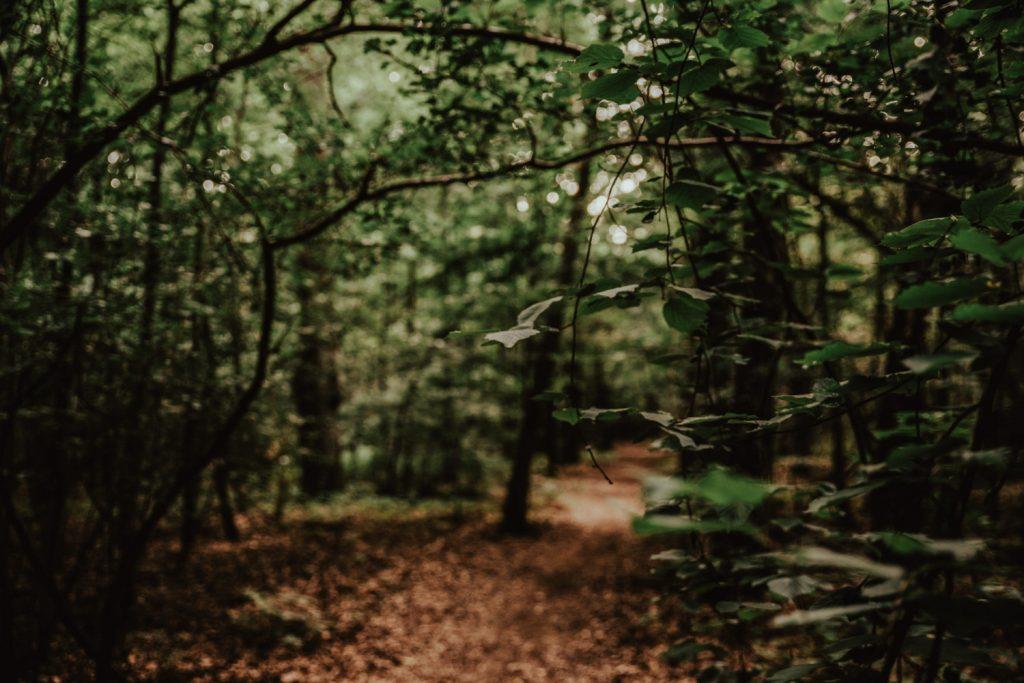 Zakochać się w lesie   Sesja narzeczeńska w lesie   Las w Warszawie 2