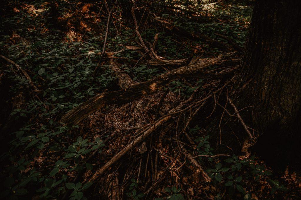 Zakochać się w lesie   Sesja narzeczeńska w lesie   Las w Warszawie 20