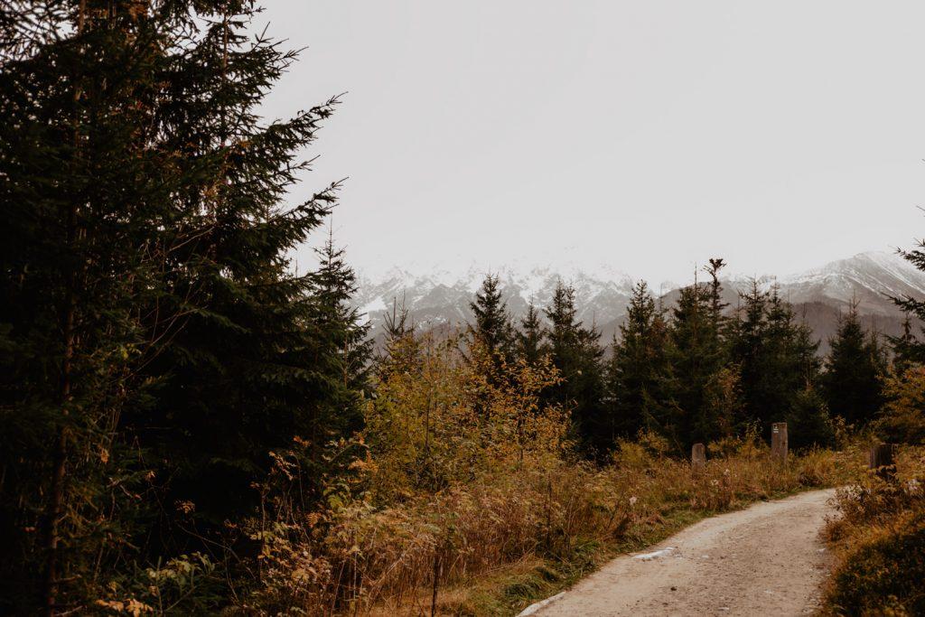 Sesja ślubna w górach 1